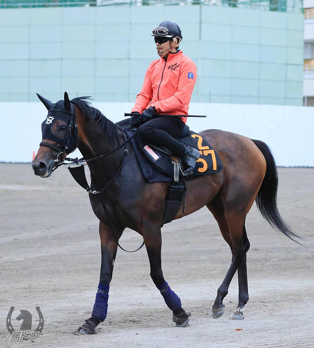オールアットワンスの馬体写真