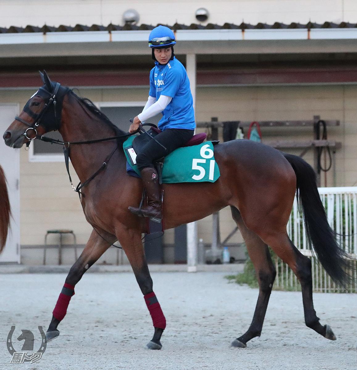 メイケイエールの馬体写真