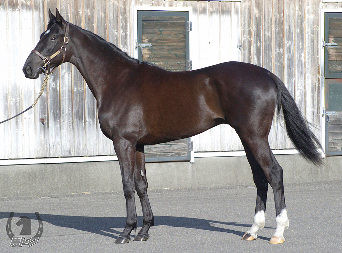 セブンサミットの馬体写真
