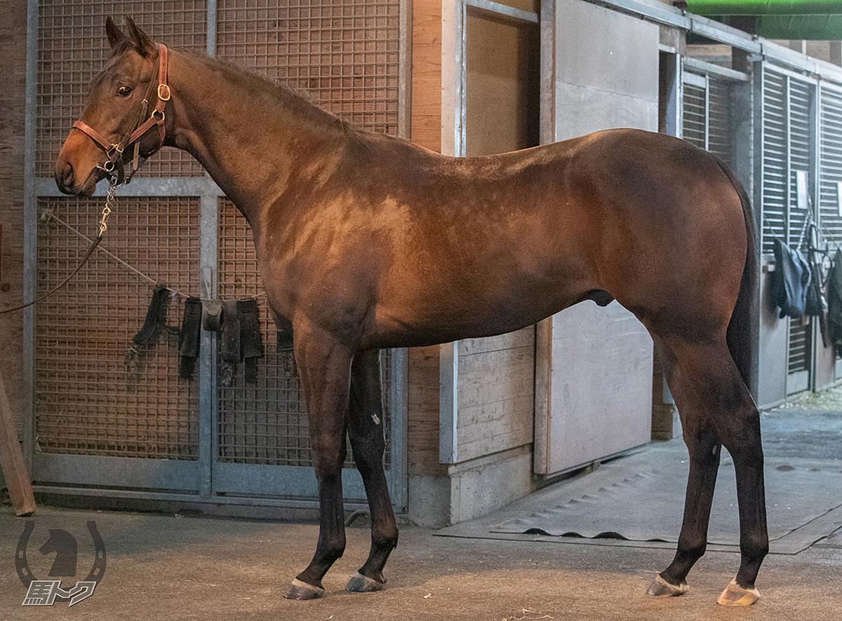 ヒーズオールザットの馬体写真