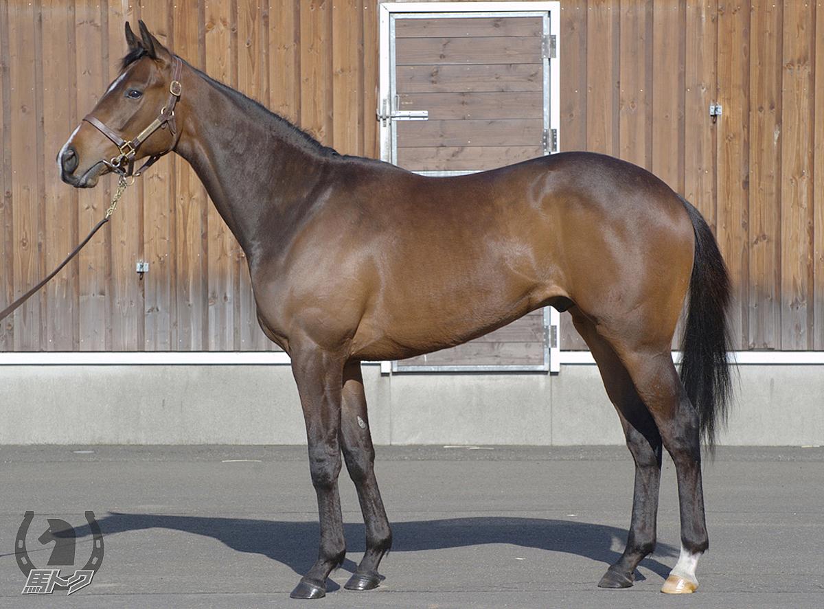 サトノスカイターフの馬体写真
