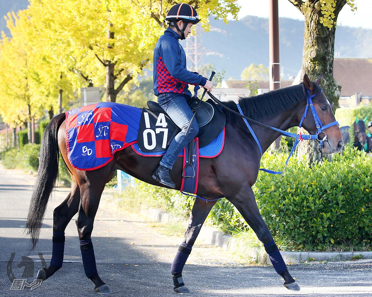 ワンダフルタウンの馬体写真