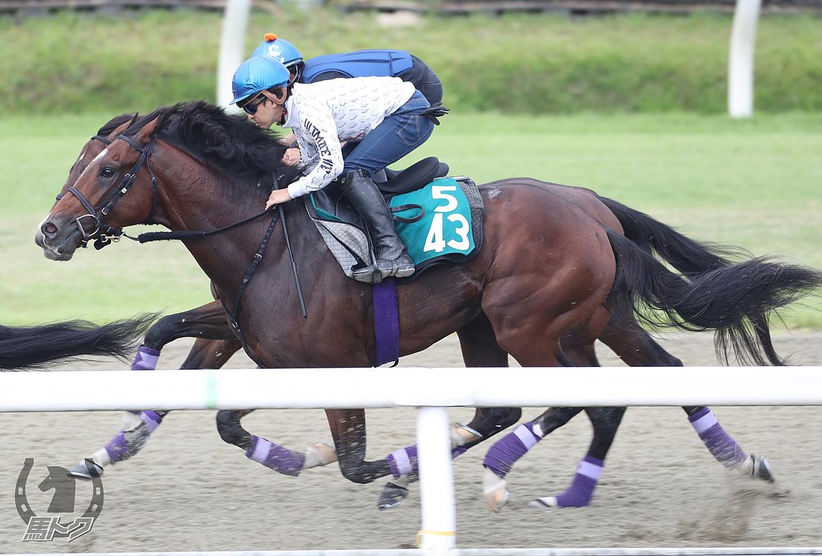 ルペルカーリアの馬体写真