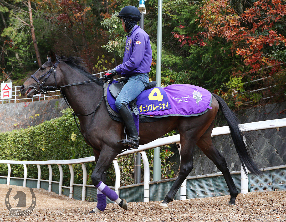 ジュンブルースカイの馬体写真
