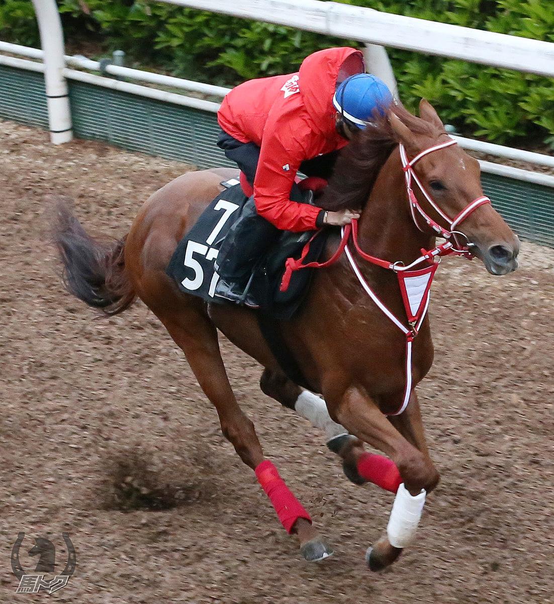 テンカハルの馬体写真