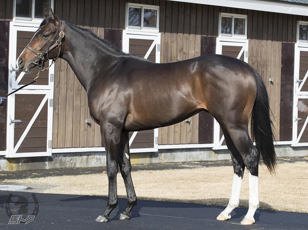 レッドフランカーの馬体写真