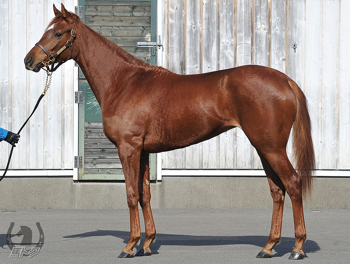 ビューティーウェイの馬体写真