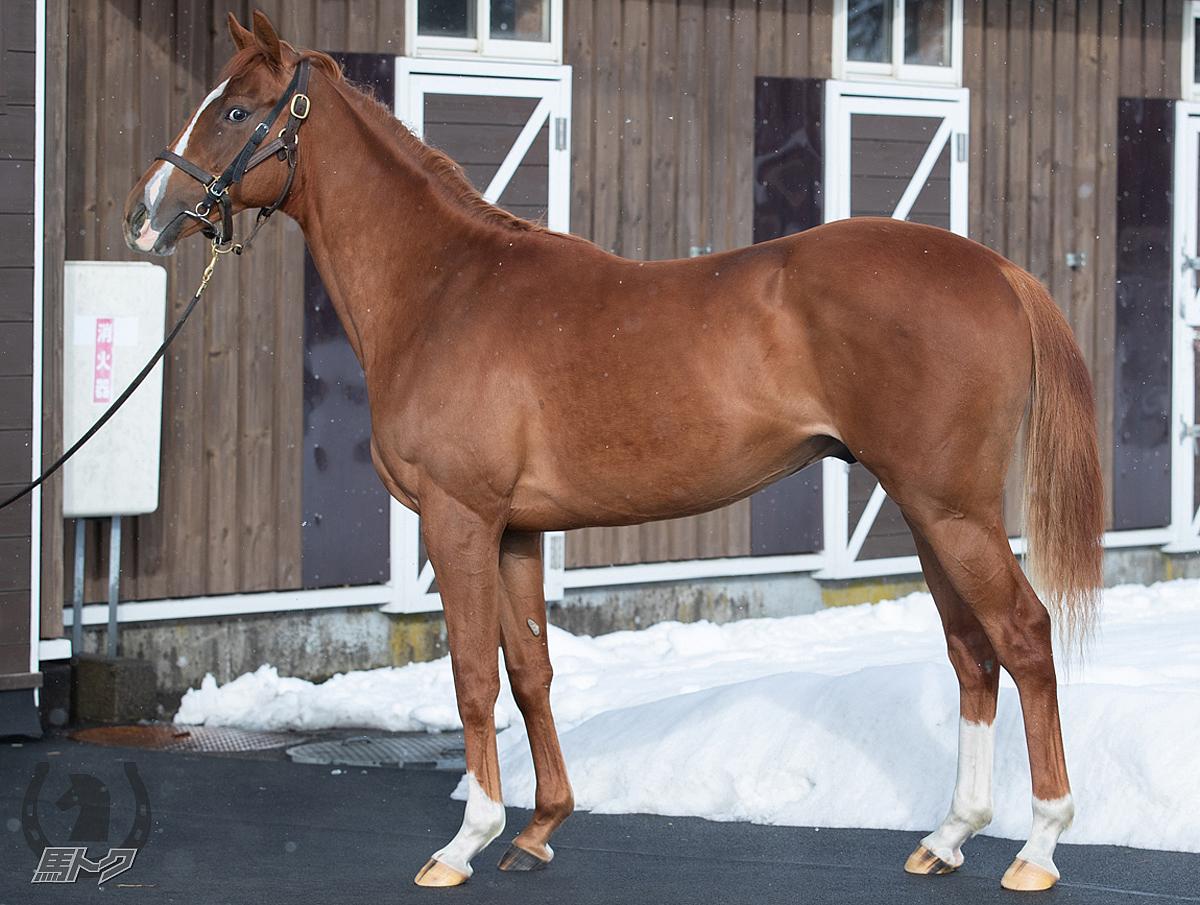 キネシクスの馬体写真