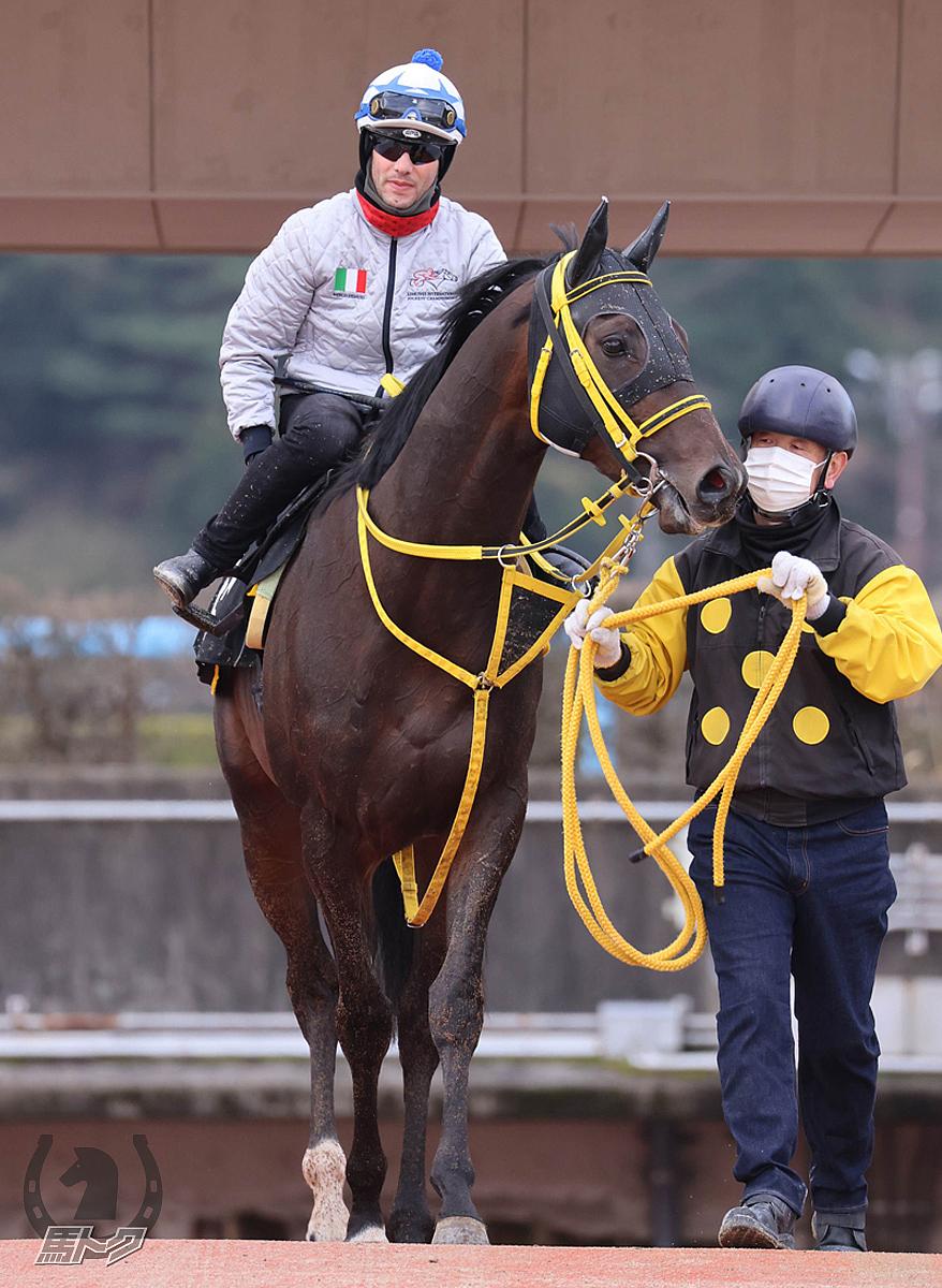 テンバガーの馬体写真