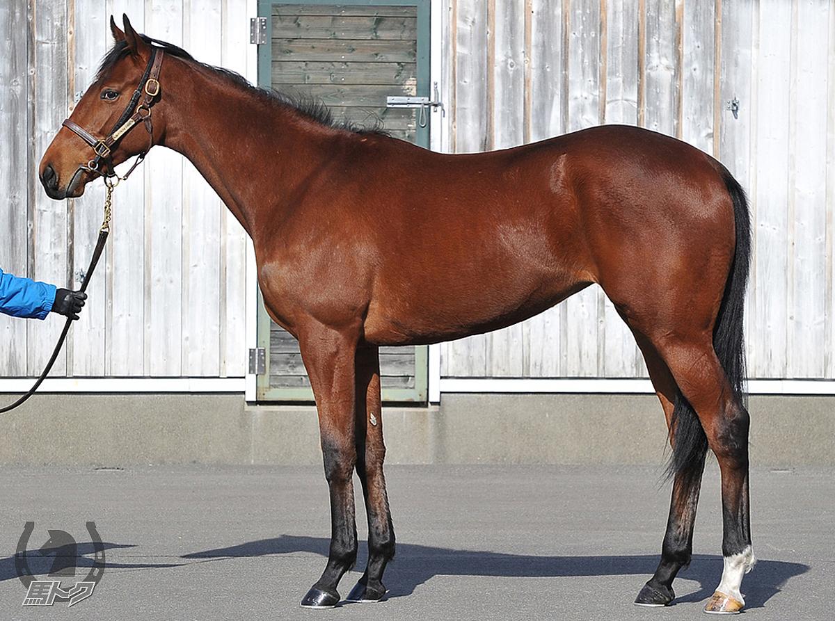 サトノレイナスの馬体写真