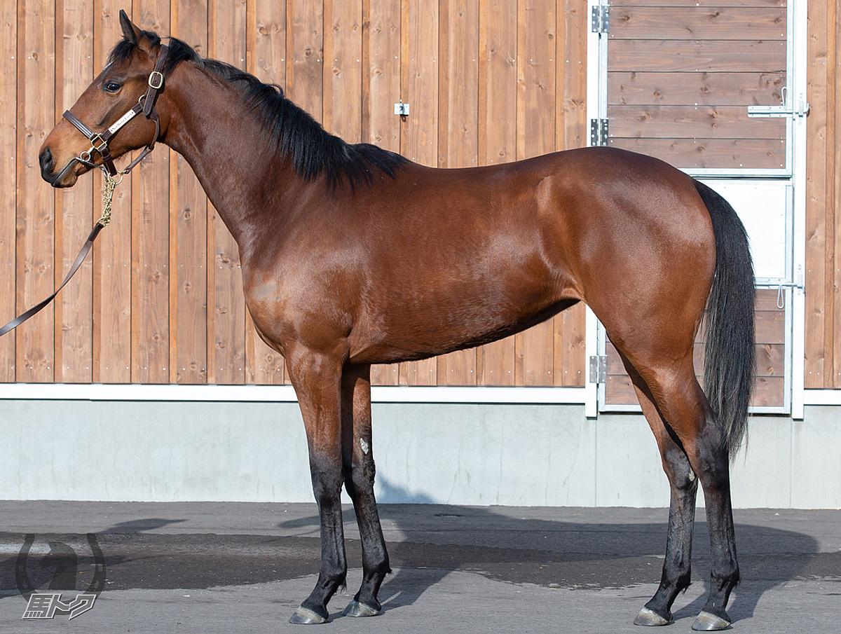 パラッツォレジーナの馬体写真
