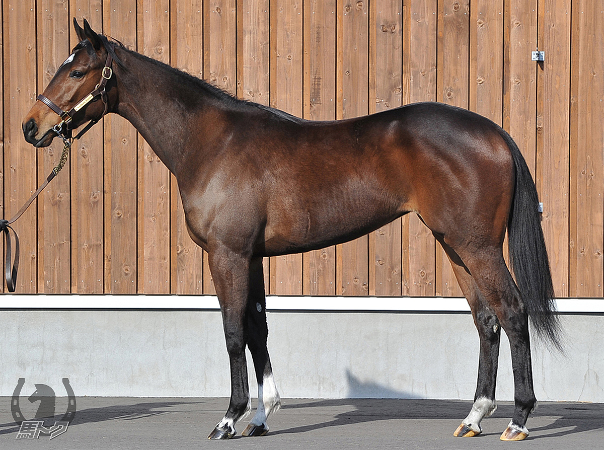 モンファボリの馬体写真
