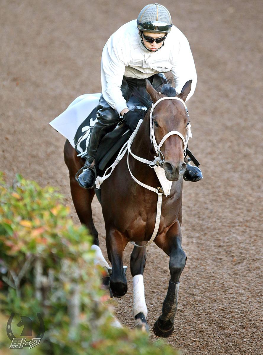 グロリアムンディの馬体写真