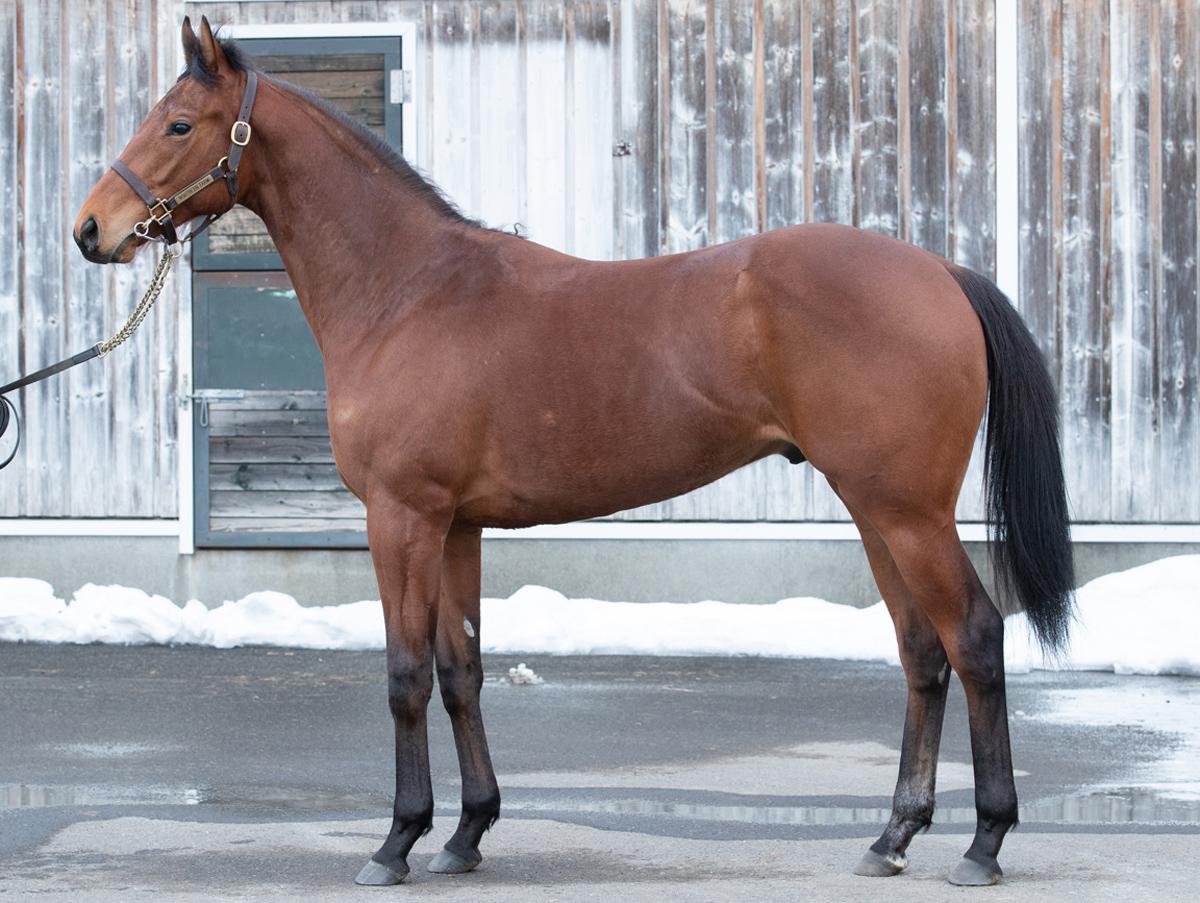 ガルフォートの馬体写真