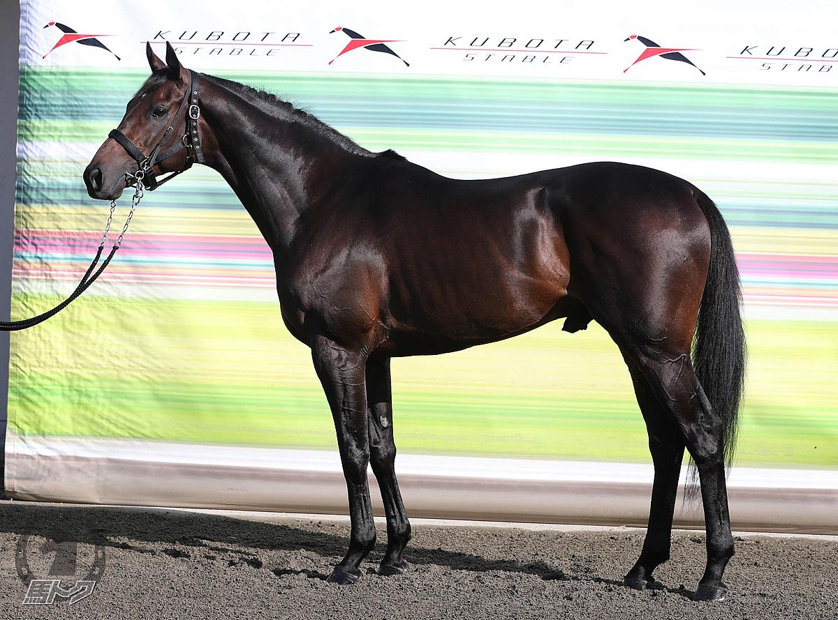 オーソクレースの馬体写真