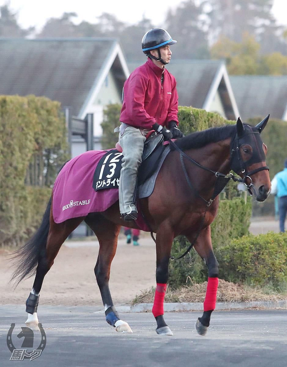 モントライゼの馬体写真