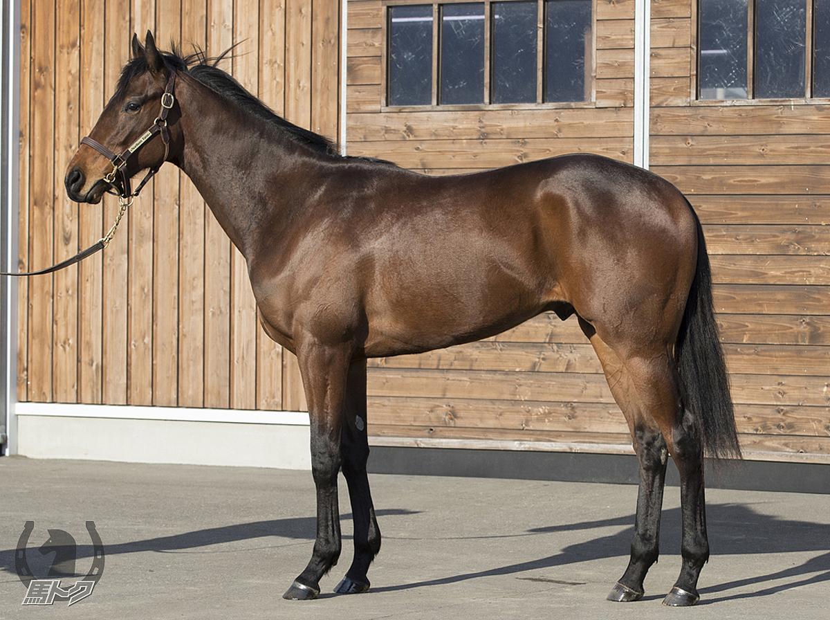 レッドジェネシスの馬体写真