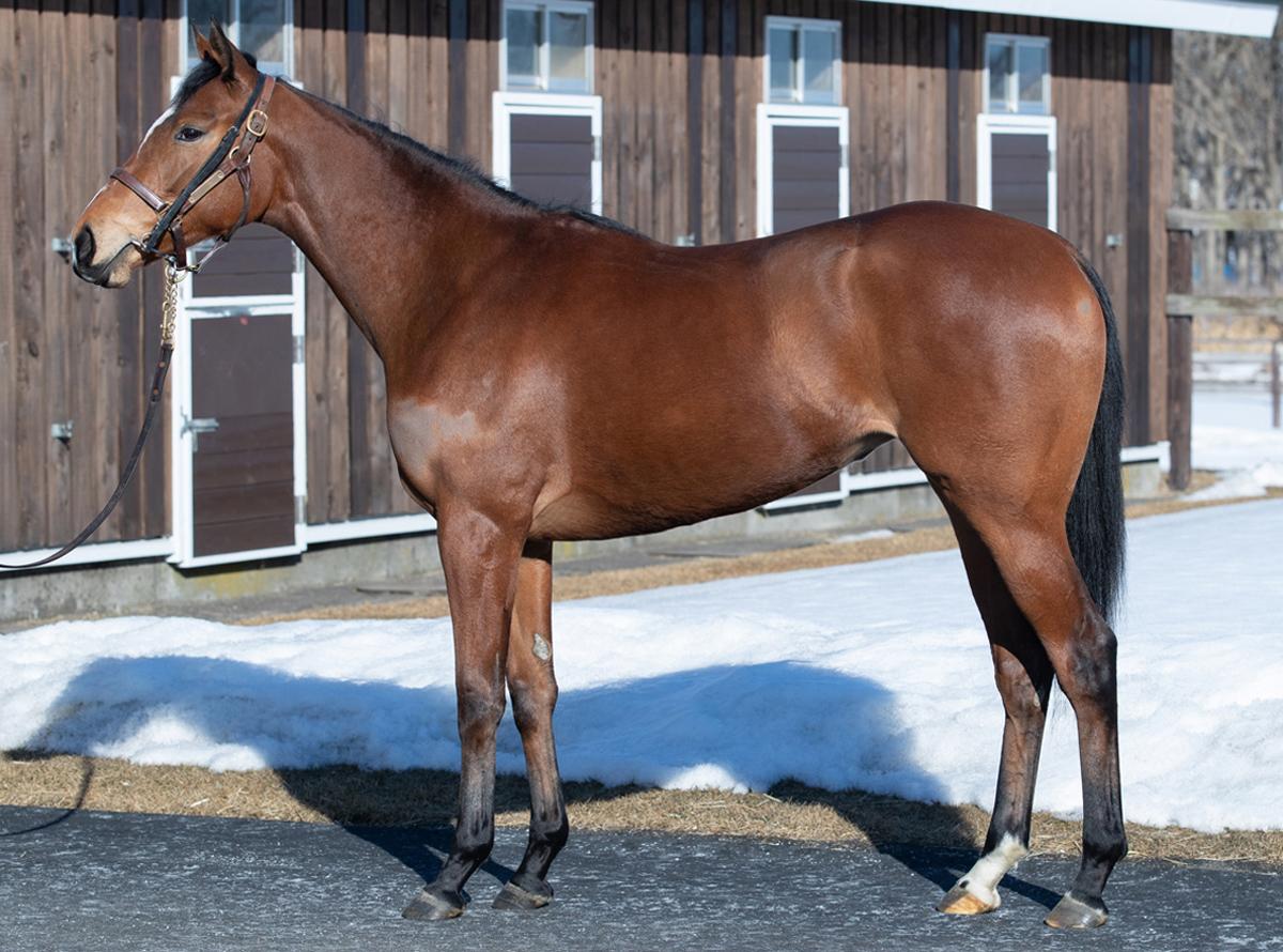 ストゥーティの馬体写真