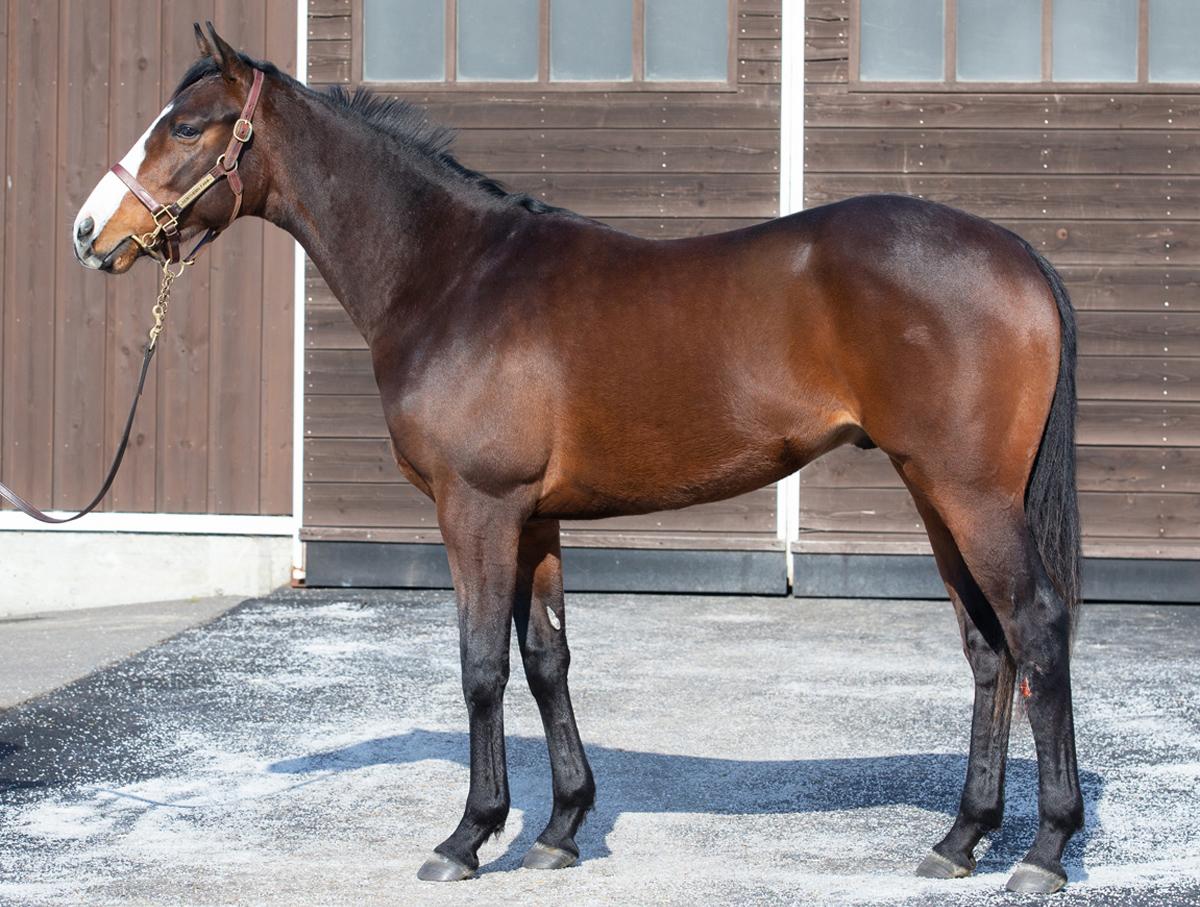 クローヴィスの馬体写真