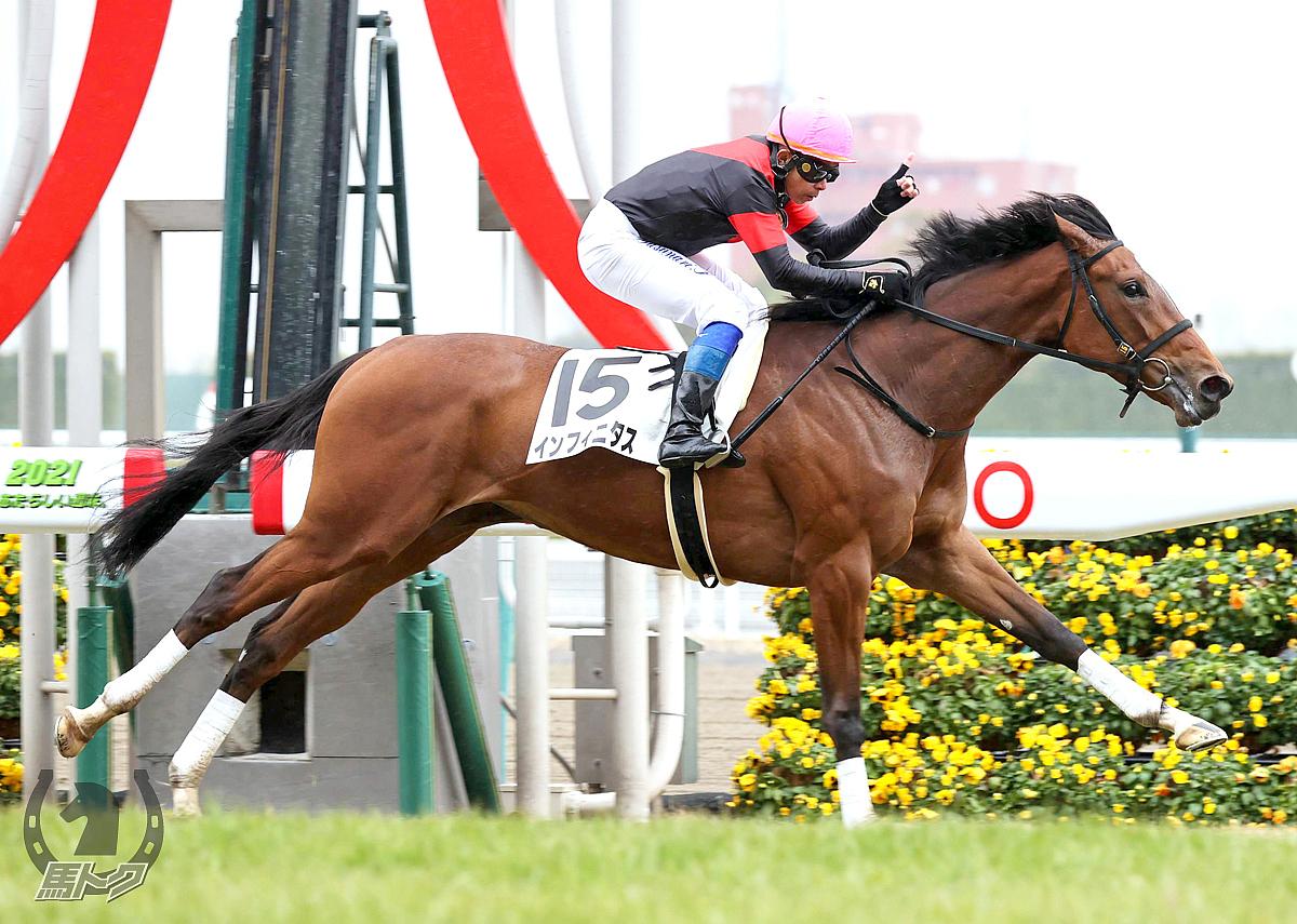インフィニタスの馬体写真
