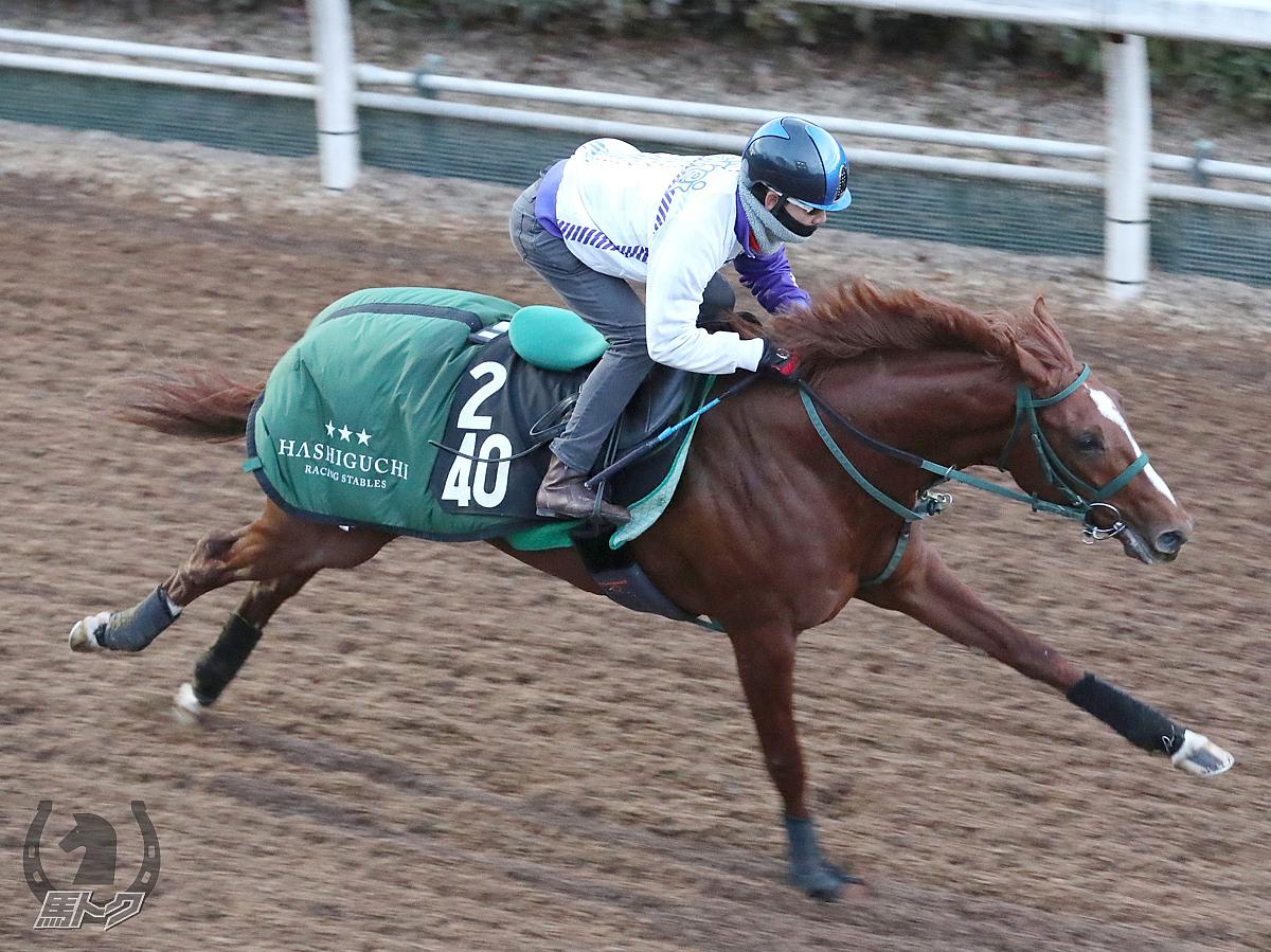 カスティーリャの馬体写真