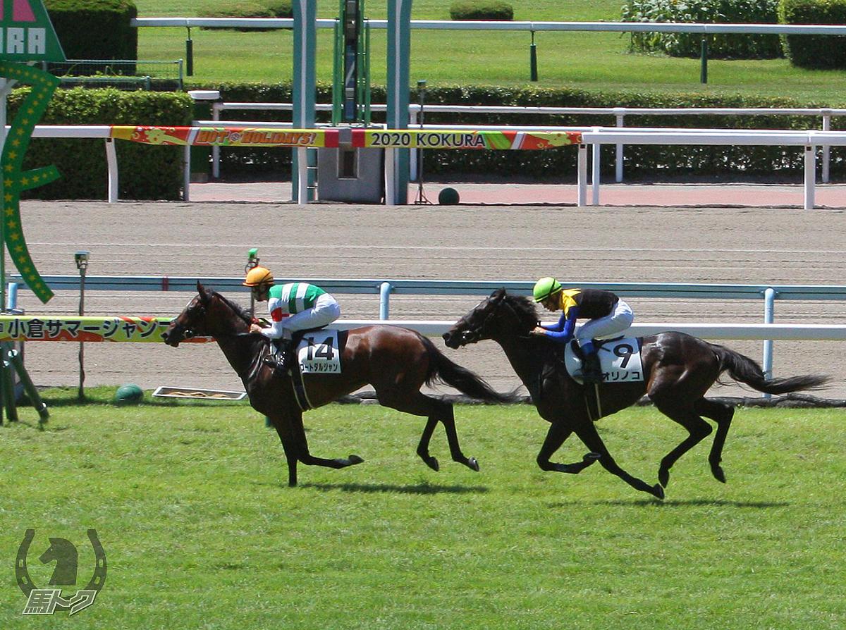 コートダルジャンの馬体写真