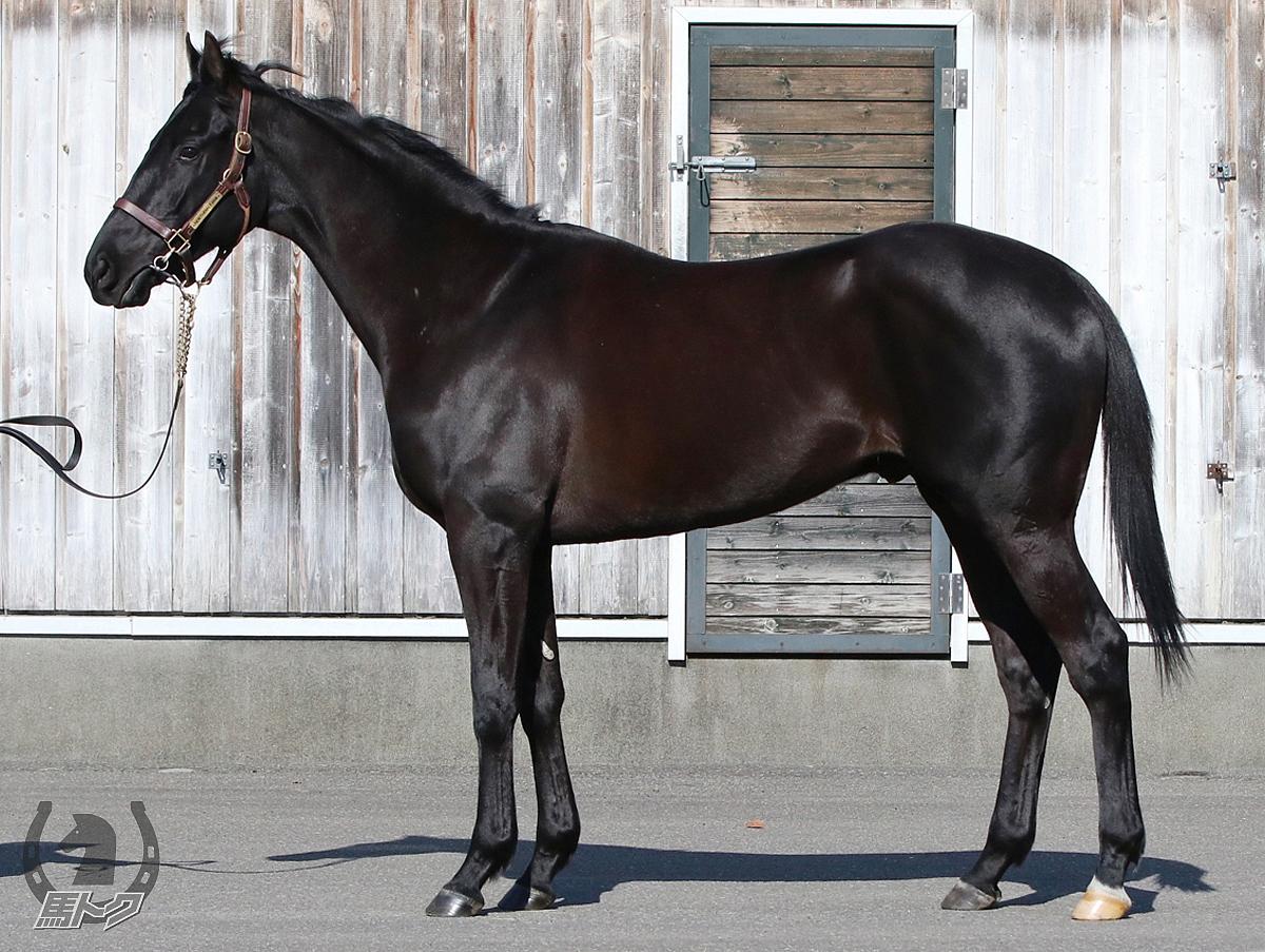 エイスオーシャンの馬体写真