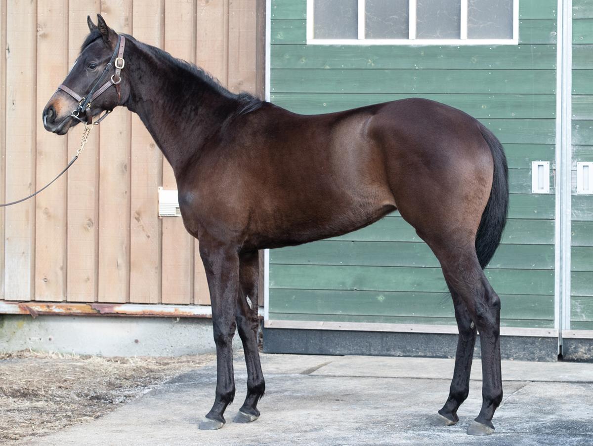 コントゥールの馬体写真