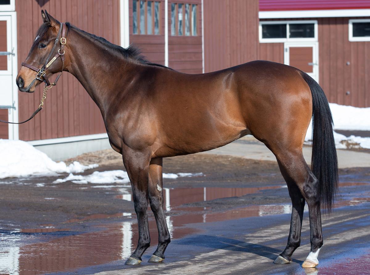 サクロモンテの馬体写真