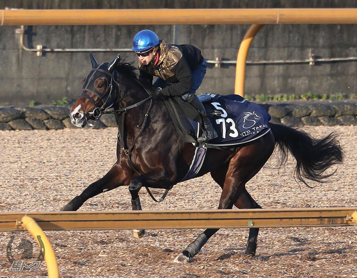 ステラリアの馬体写真