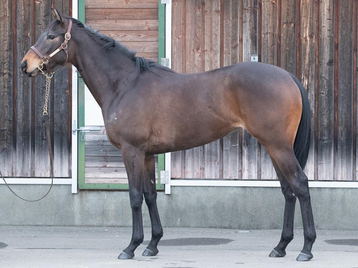 オスタークラングの馬体写真