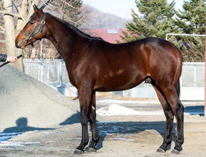 ノーザンピークの馬体写真