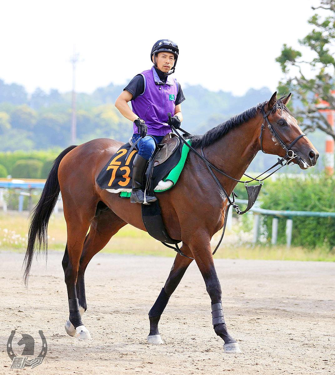 ラペルーズの馬体写真