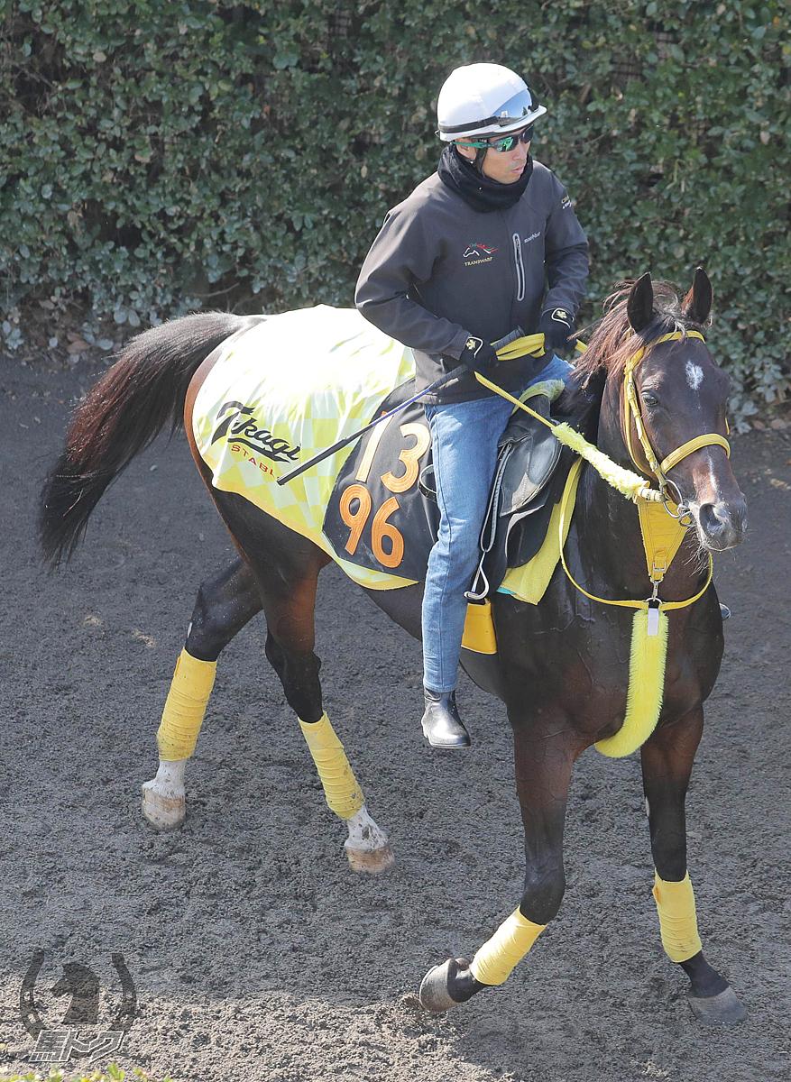 モメントグスタールの馬体写真