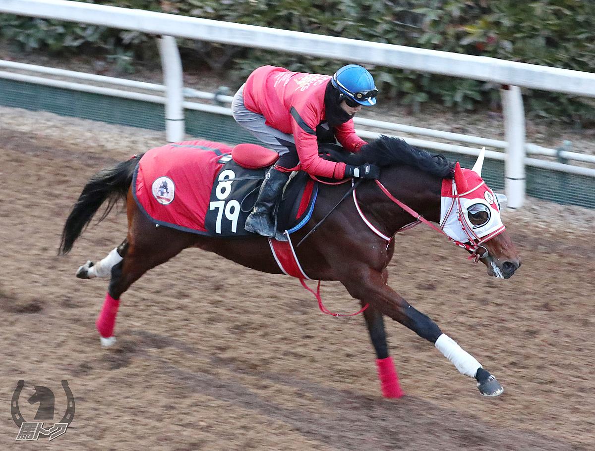 バスラットレオンの馬体写真
