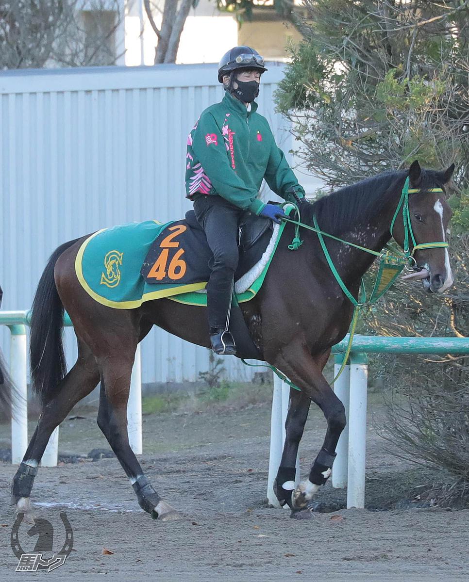 オリアメンディの馬体写真