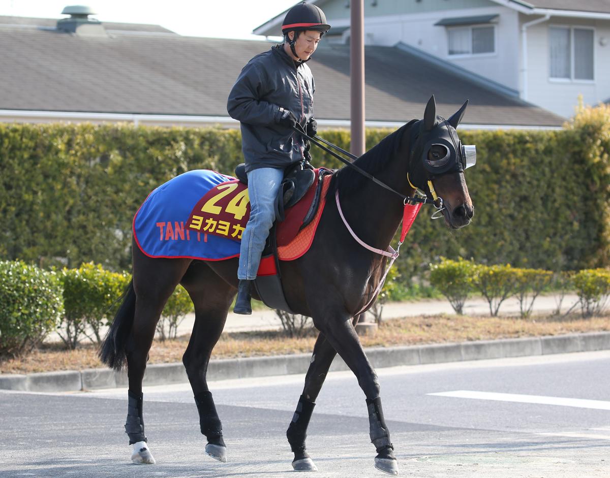 ヨカヨカの馬体写真