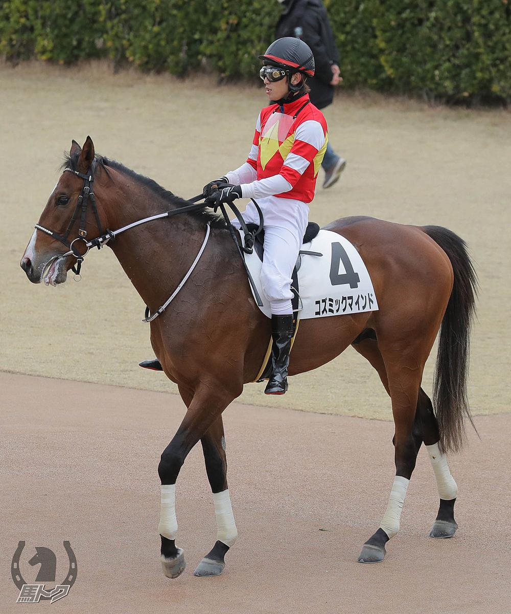 コズミックマインドの馬体写真