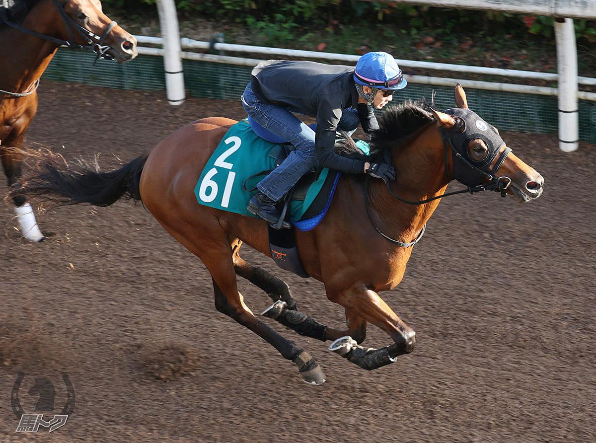 トゥデイイズザデイの馬体写真