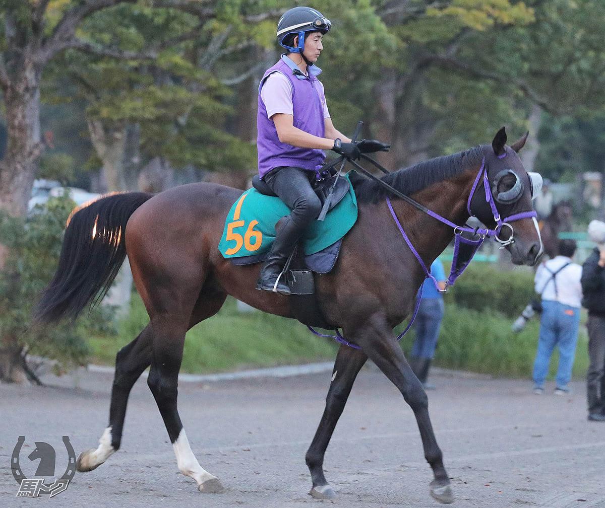 レッドリベリウスの馬体写真