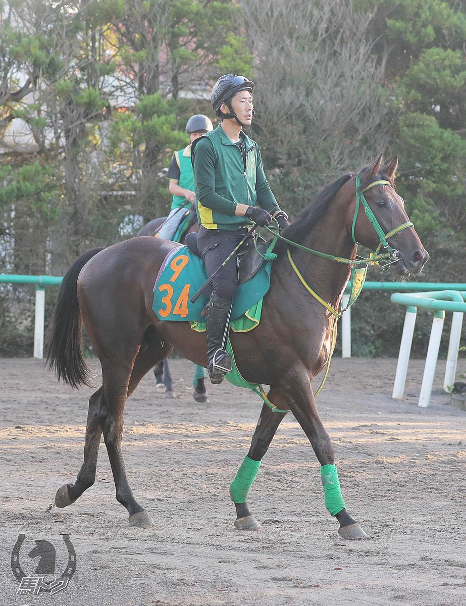 サノコアの馬体写真