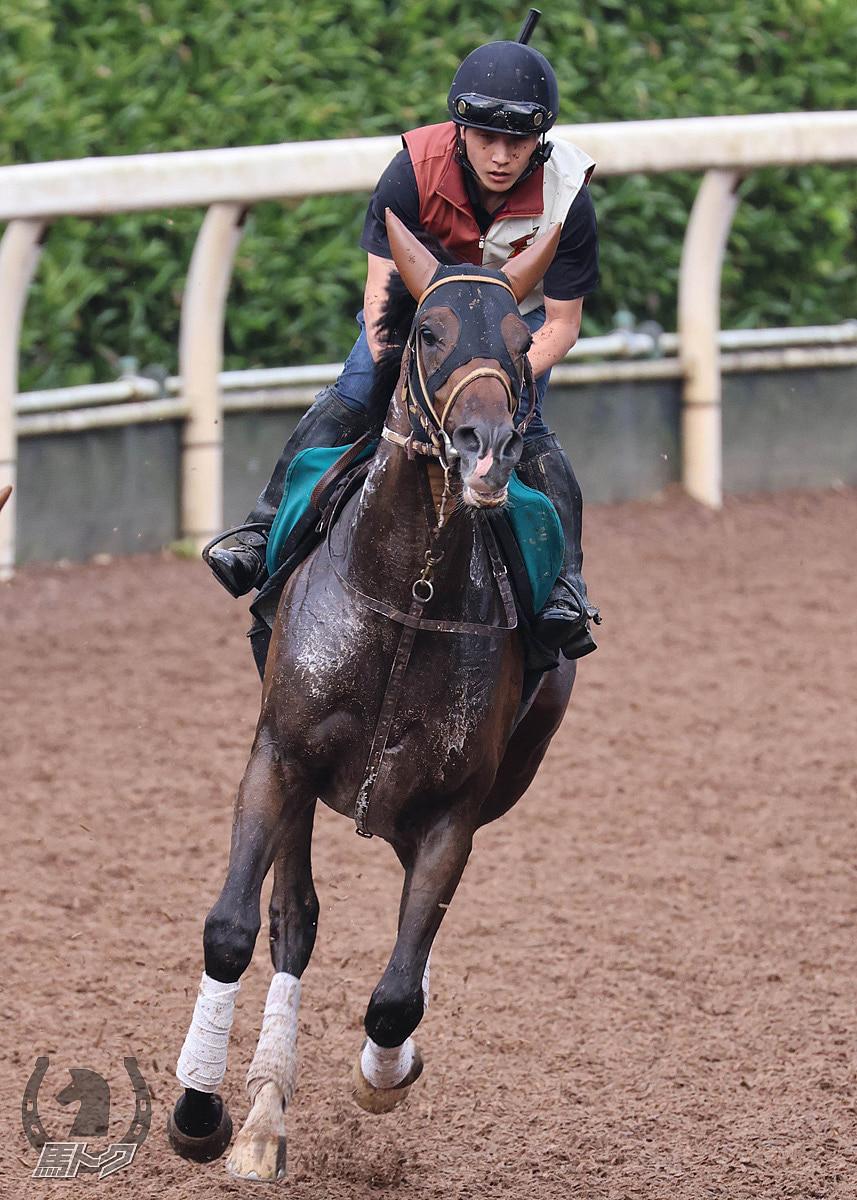 サイードの馬体写真