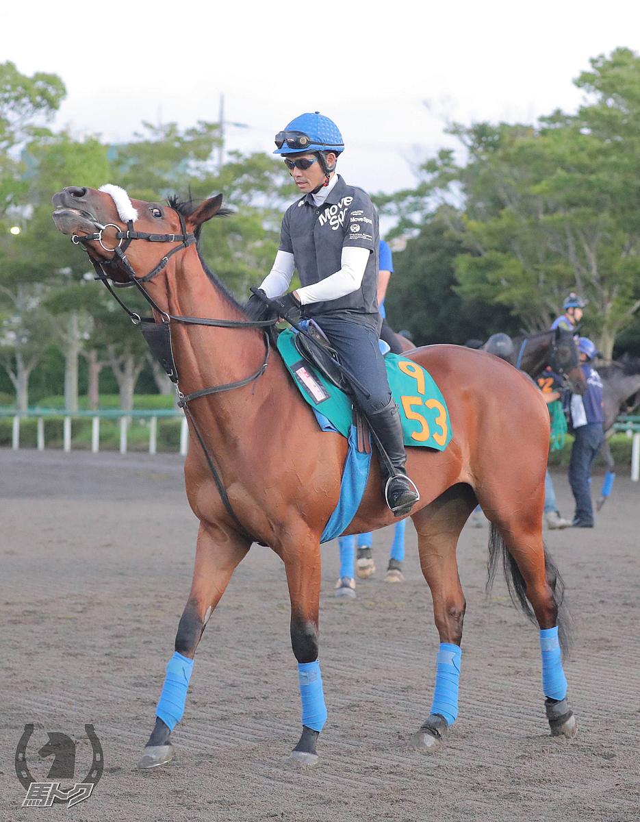 サトノゼノビアの馬体写真