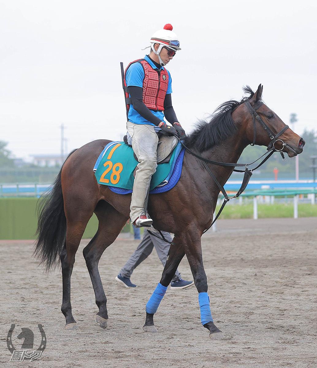 キミワクイーンの馬体写真