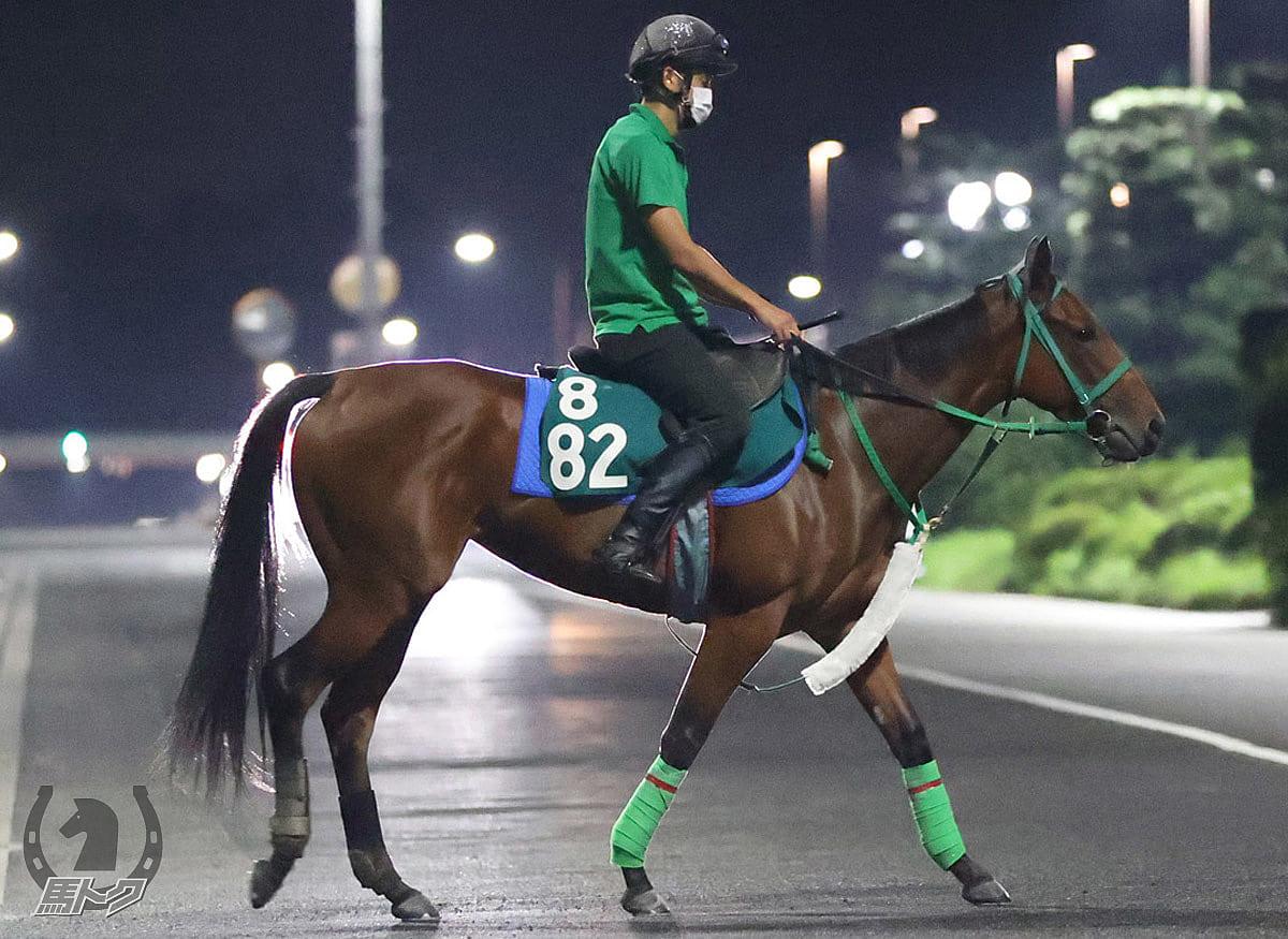 ラキエータの馬体写真
