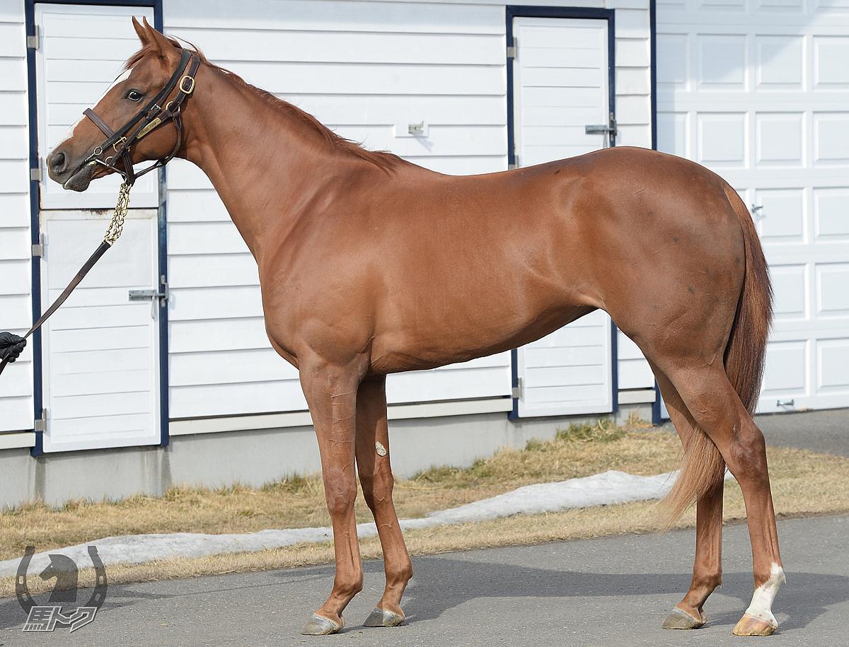ストキャスティークの馬体写真