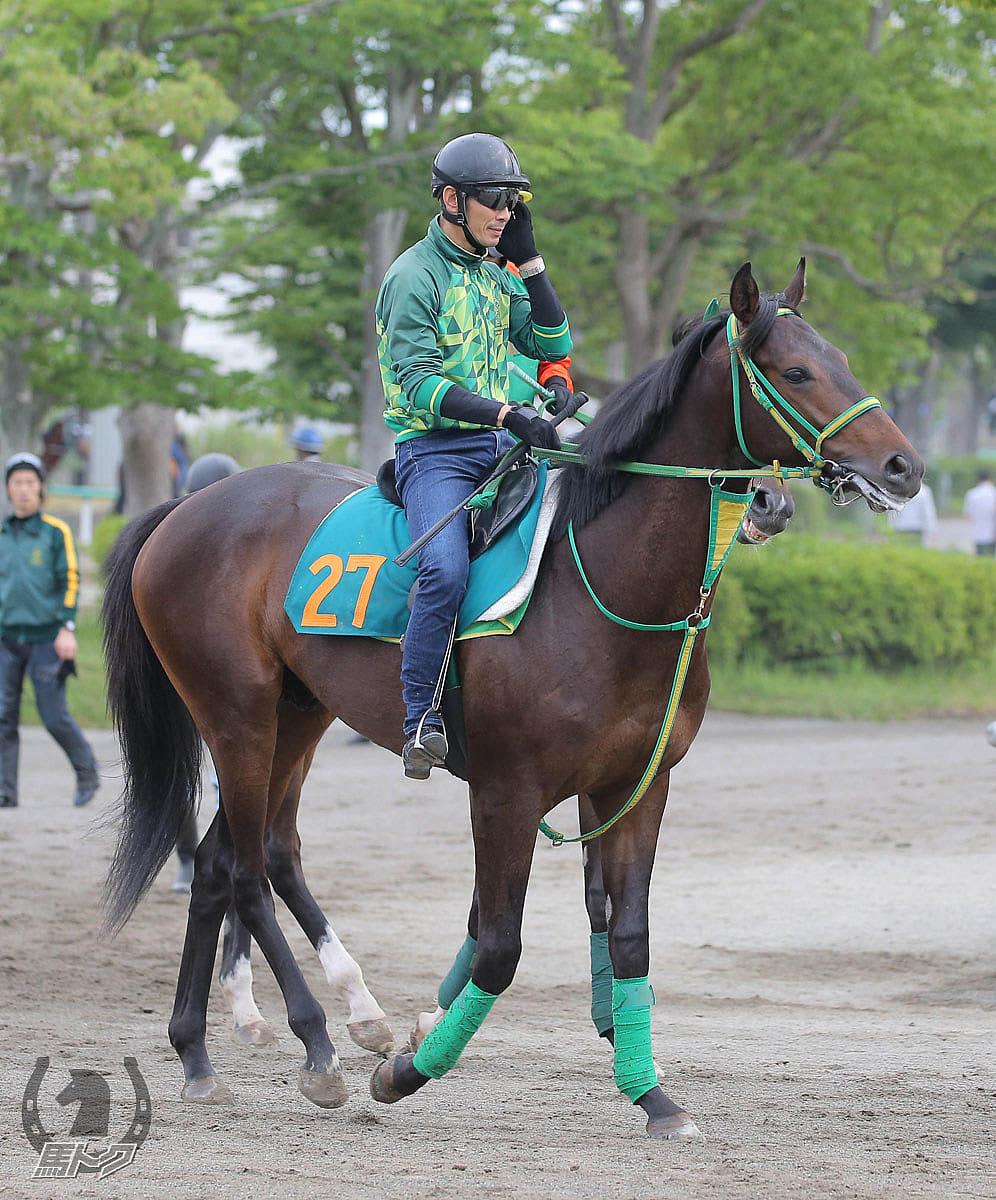 サトノストロングの馬体写真