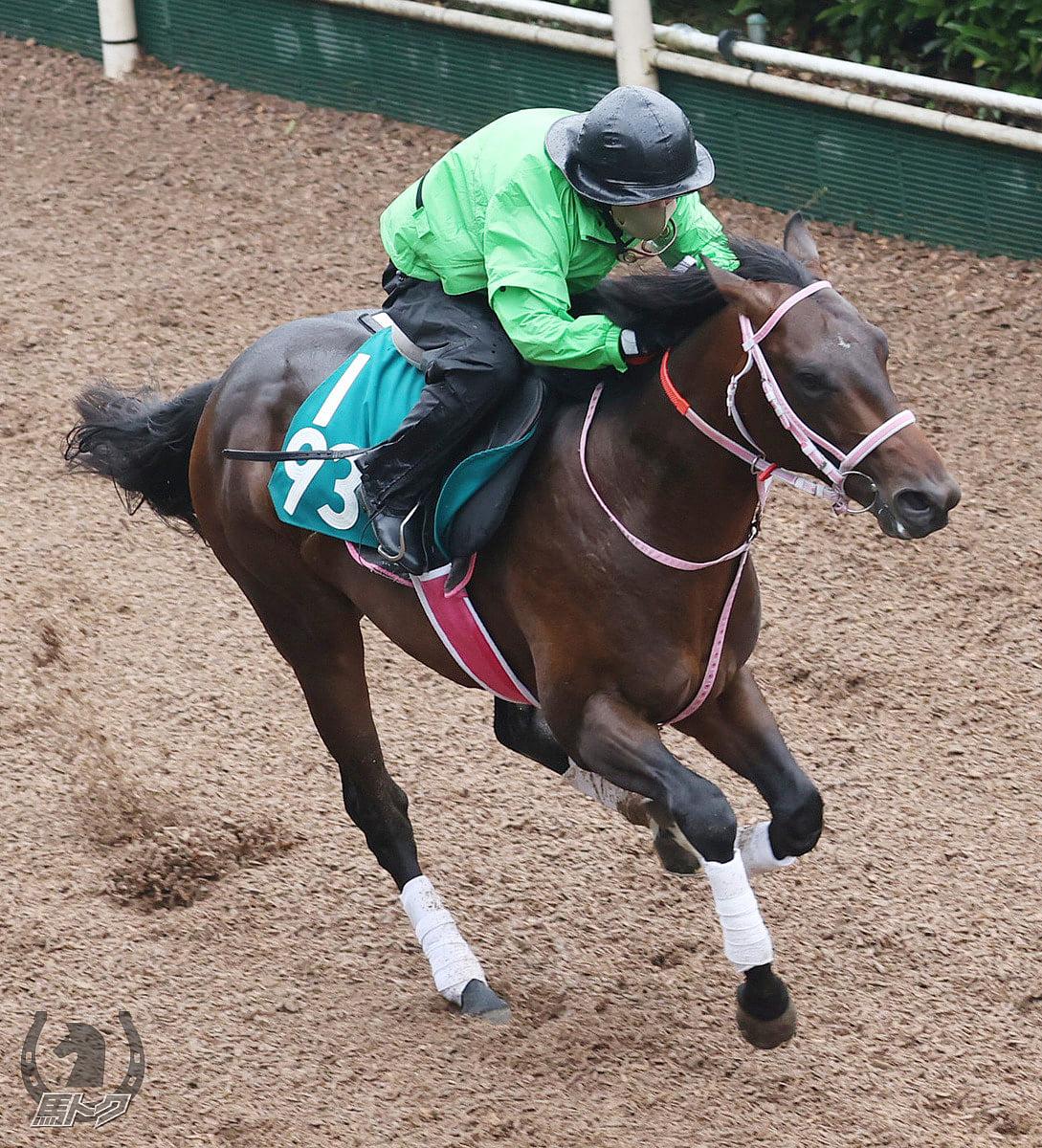 アカノストロングの馬体写真