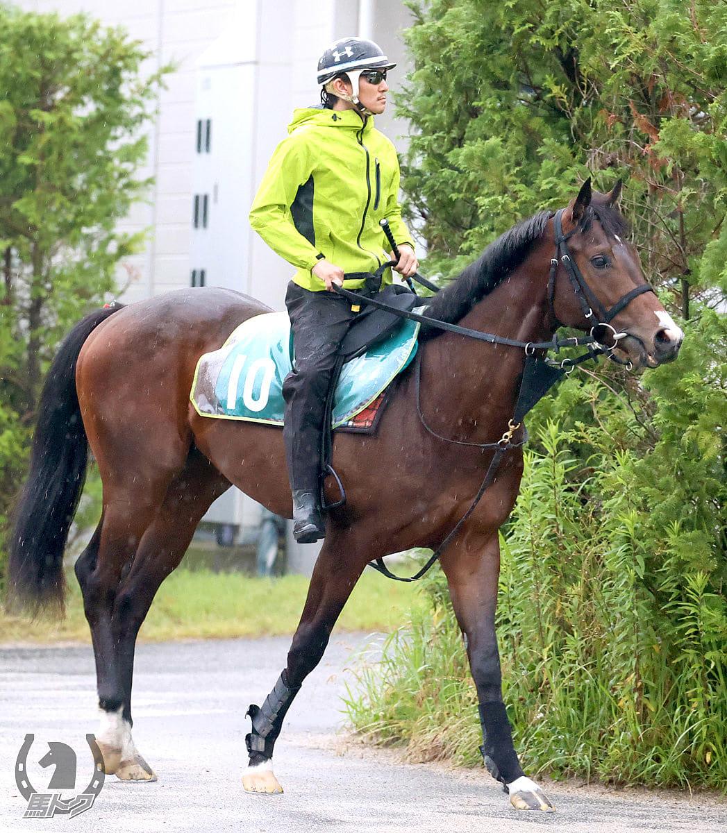 プルパレイの馬体写真