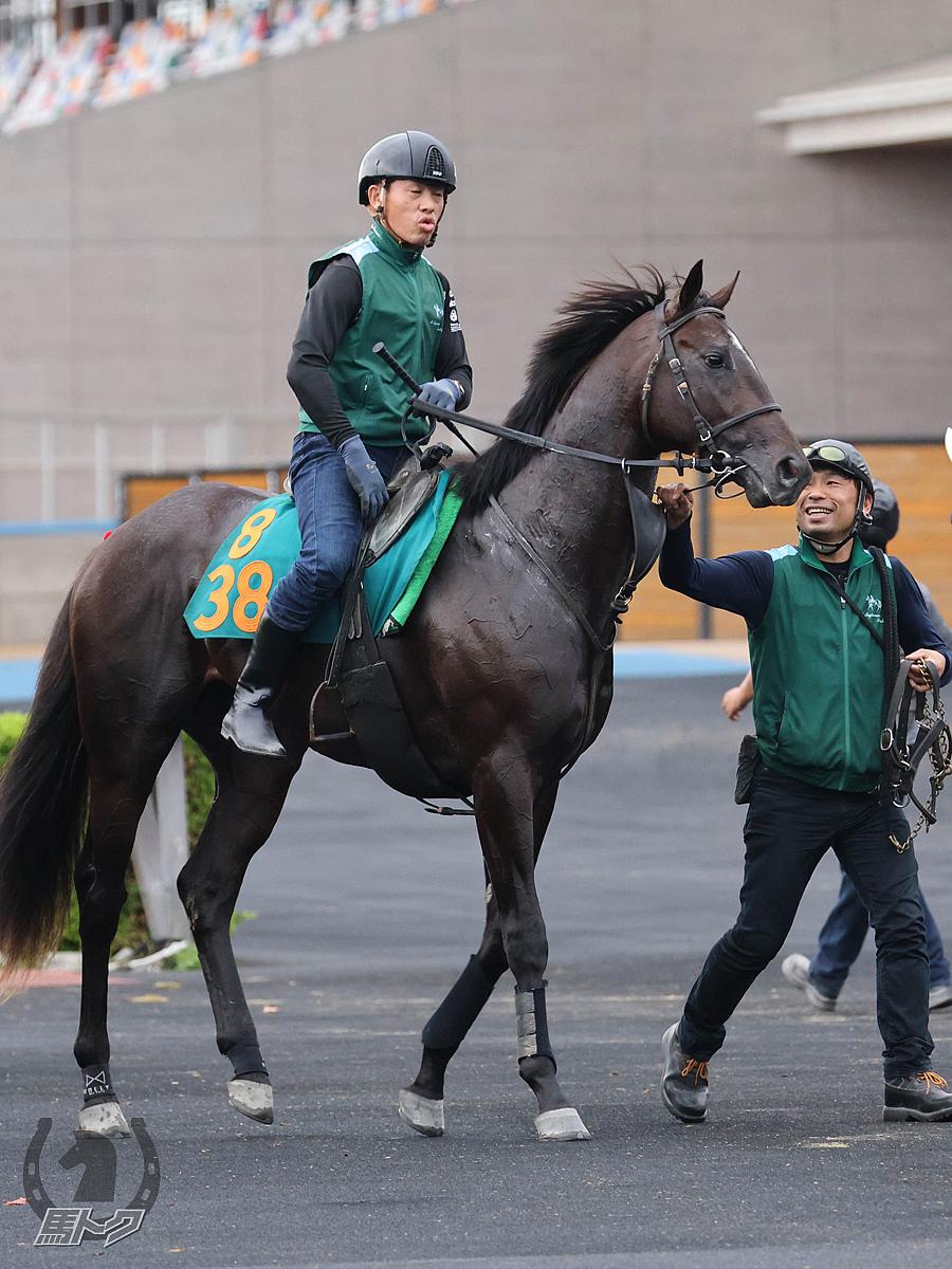 レッドラディエンスの馬体写真